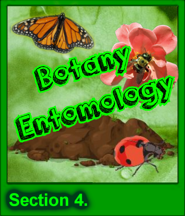 4 Botany and Entomology Button