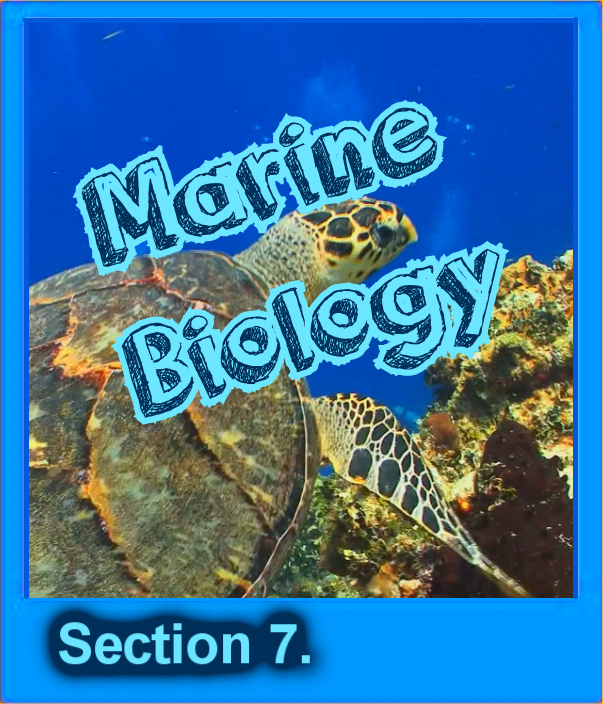 7 Marine Biology Button