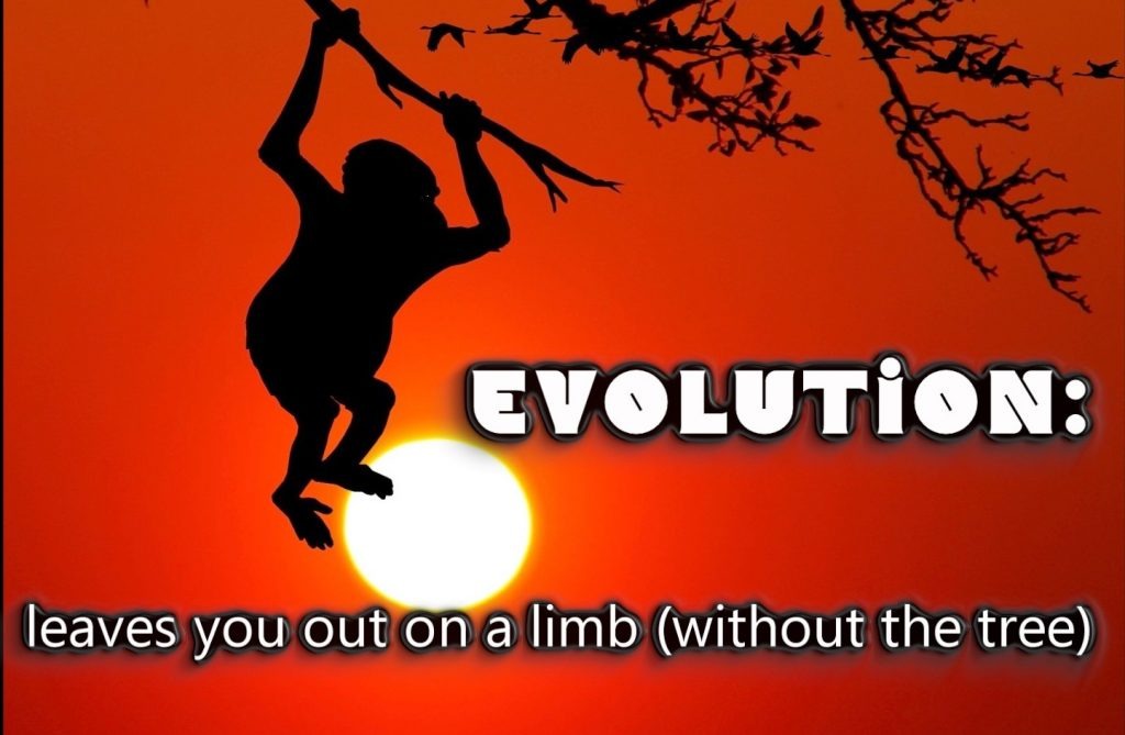 Evolution funny_000000