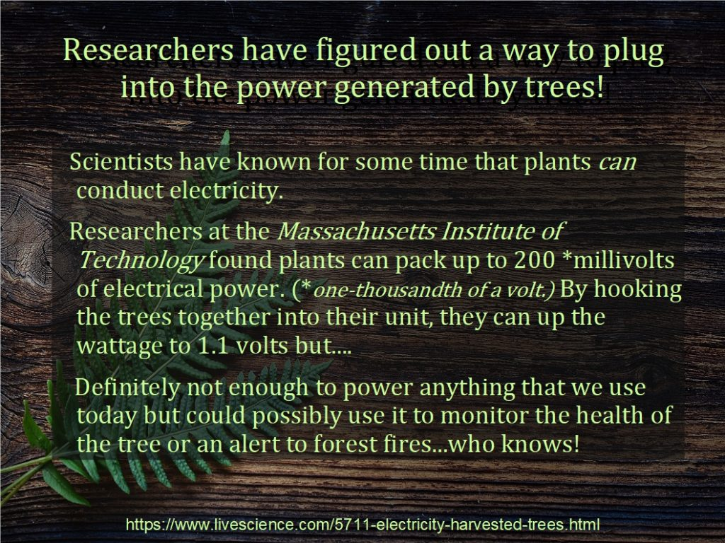 Generating Electricity From Trees
