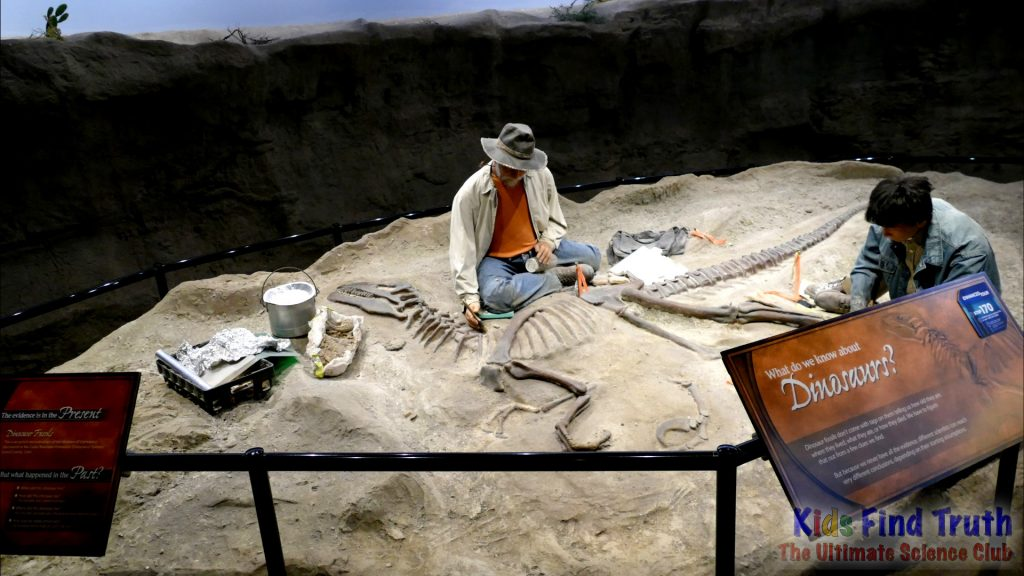 Paleontology2Museum display_000000