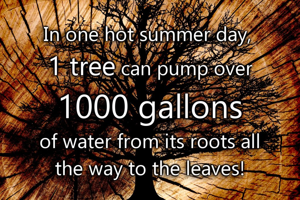 Tree and gallons of water