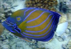 angelfish-202325_1920